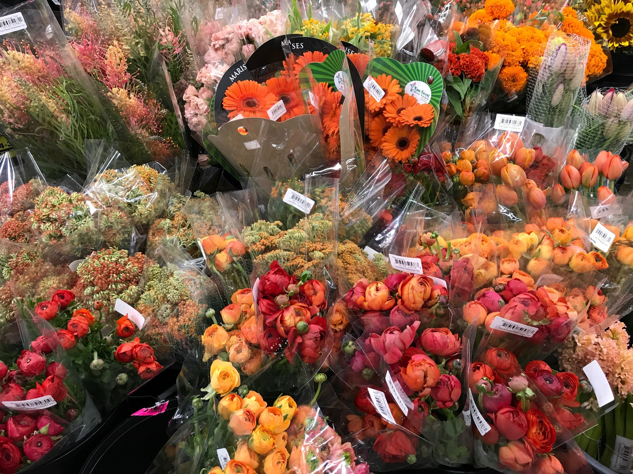 Cut Flower Wholesale has been in business since 1987. Our ongoing commitment to the floral business includes our goal to meet all the needs of our customers ...