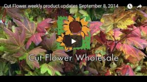 Cut Flower product updates September 9, 2014