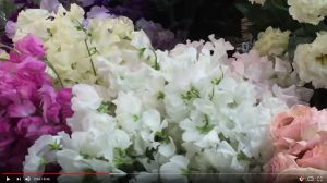 Showcasing all the flowers we receive from Japan