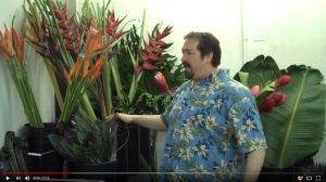 Tropical flower update from February 9, 2010 with a funny twist