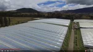 Aerial view of one of our Rose farms in Ecuador