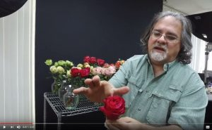 Several rose breeders have sent us multiple brand-new rose varieties.