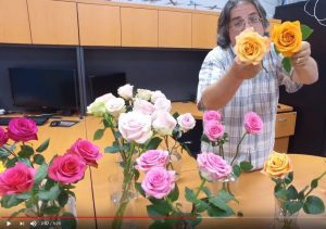 This week at CFW: brand new rose varieties in action!