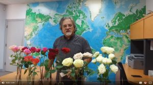 New rose varieties received from our friends at Plantec in Ecuador