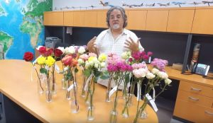 Outstanding rose varieties received this week from our friends at Conectiflor in Ecuador