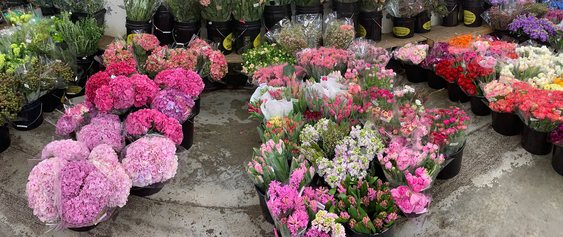 Welcome to the WOW Warehouse! About Cut Flower Wholesale