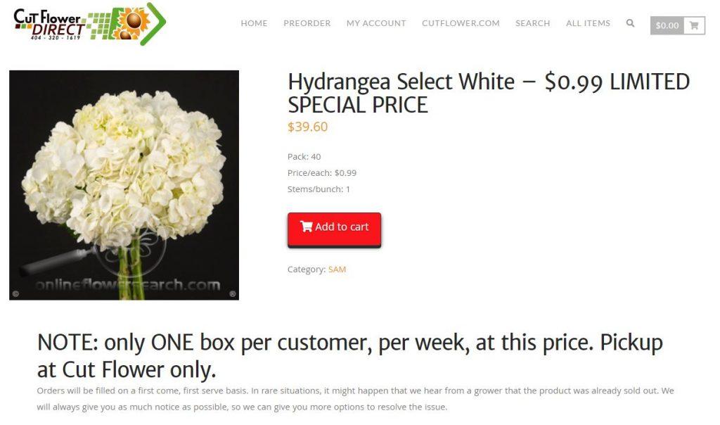 Hydrangea-special
